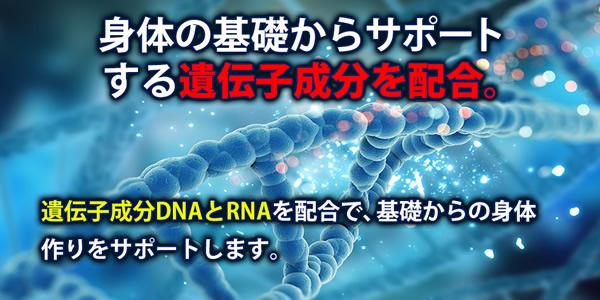 .体の基礎からサポートする遺伝子成分DNA・RNAを配合